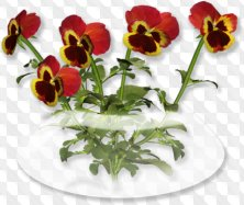 Flowers png download - garden flowers on a transparent background (125 free png images)