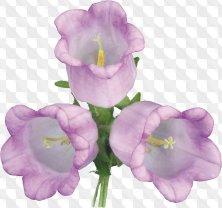 Bells flowers png download - Floral clipart on transparent background (22 free png)