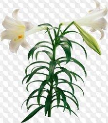 Flower clipart for Photoshop - Lilies garden