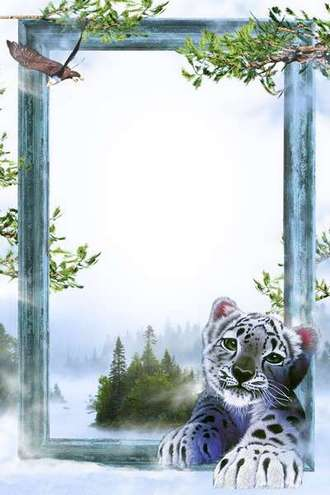 Photo frame - Snow leopard ( free photo frame PNG + PSD download )