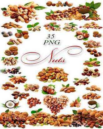 Nuts png on a transparent background ( free 35 png images download )