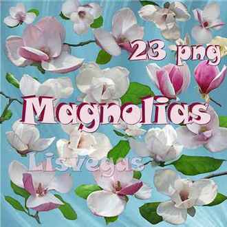 Magnolia png ( free flowers Magnolia 23 png images download, transparent )