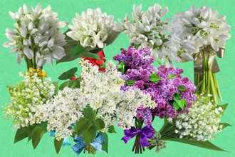 Bouquets spring flowers psd + png ( Snowdrops, lily of the valley and lilacs )
