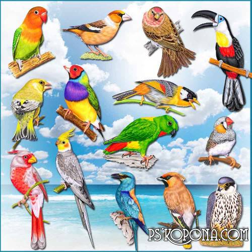 Clipart transparent background - Beautiful birds png download