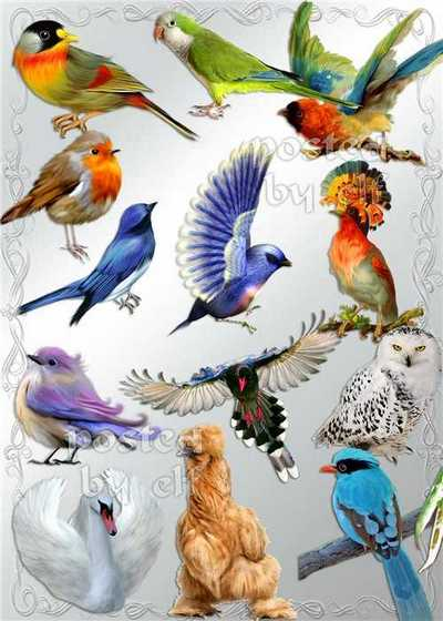 Birds png download - free 100 png images (transparent background)