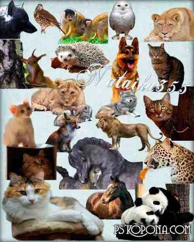 Graphics for design - Pets & animals