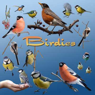 Birds psd download - free birdies clipart psd file (transparent background)