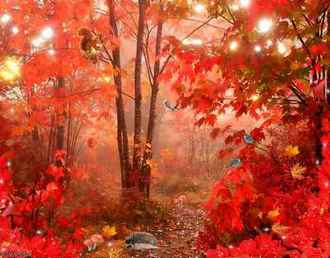 Fabulous autumn forest psd ( free Nature multilayered psd download )