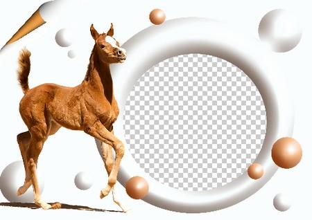 Photo Frame template - My horse ( frame psd, frame png, frame ...