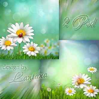 Chamomile background psd