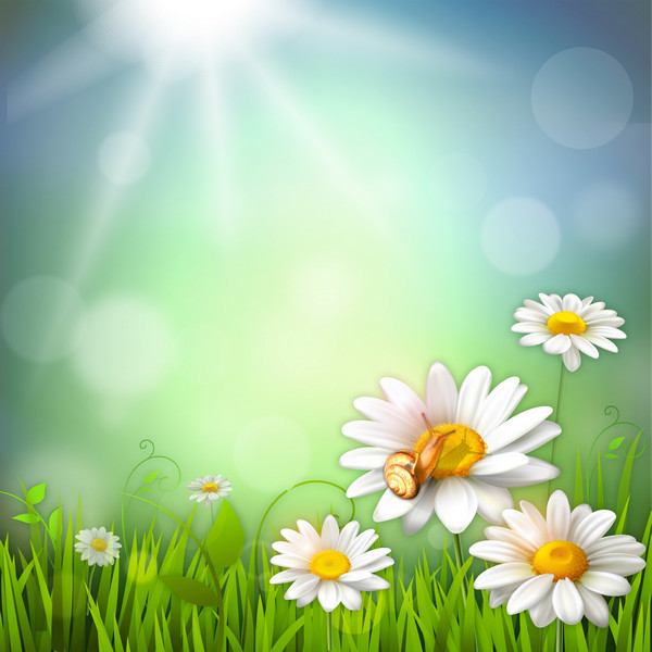 Chamomile background psd  PSD background for Photoshop free
