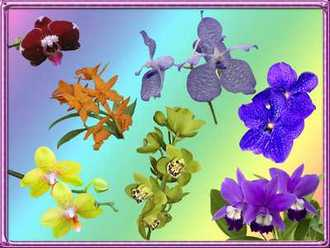 Orchids psd