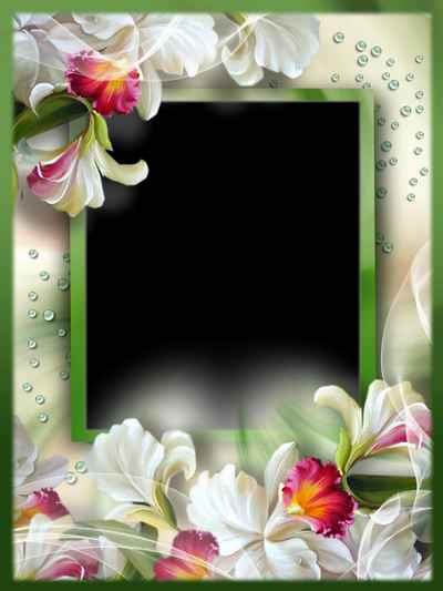 Beautiful flower photo frame png & psd download