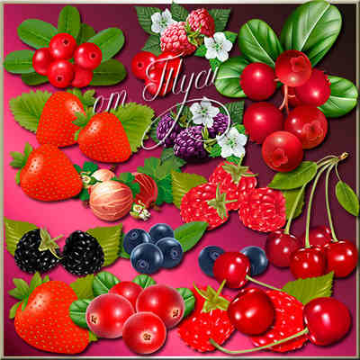 Berries Clipart with transparent background (psd png download )