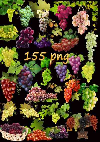 Grapes png and bunch of grapes png - 155 png download, transparent