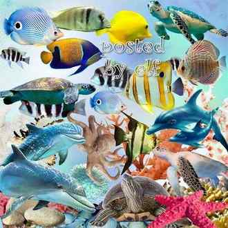 68 Sea png images - Dolphin png, fish png, coral png, shell png, algae png ( transparent, download )