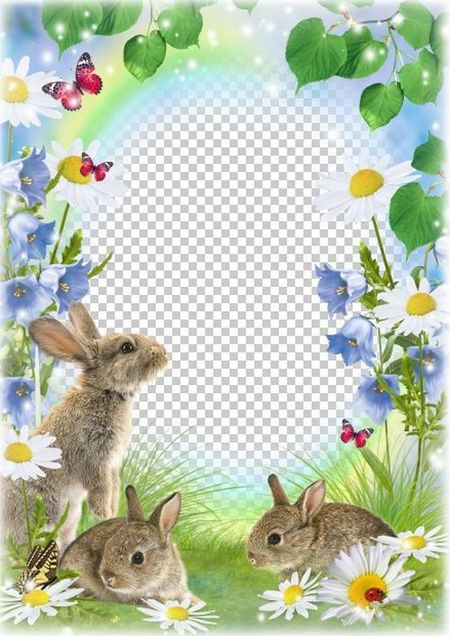 Photo frame for summer photos - Fluffy bunny in the forest ( psd ...