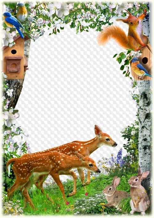 Bosque de primavera, marco de fotos con animales y pájaros. Marco ...