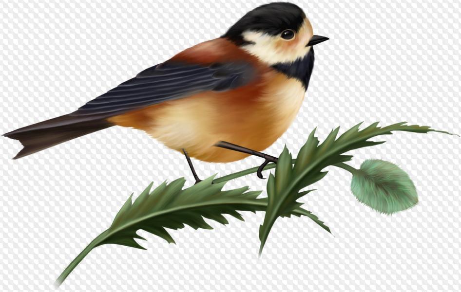 Картинки для детей на прозрачном фоне птицы