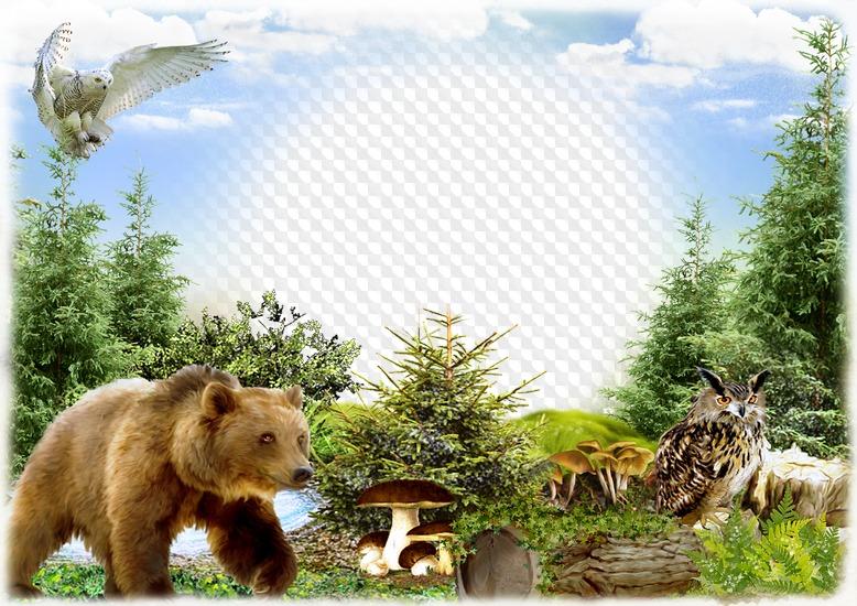 Фоторамки природа животные