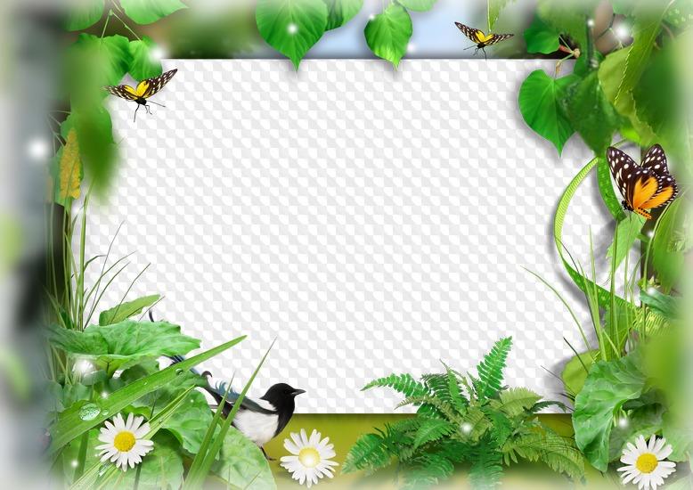 Marco de fotos naturaleza de verano. Marco PNG transparente, PSD ...