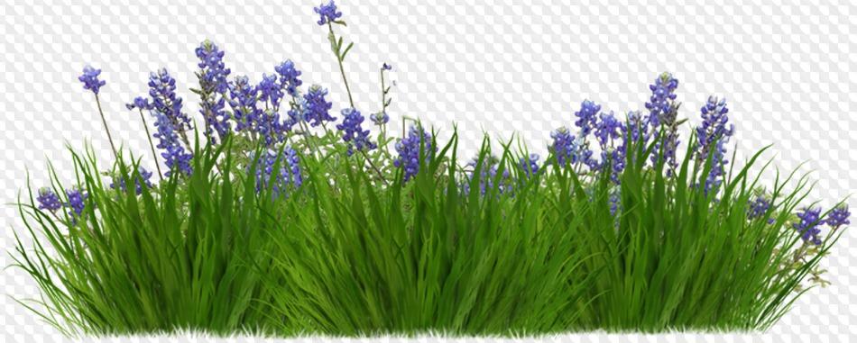 34 Png Summer Garden Png Bushes Of Flowers Trees Shrubs Grass Ornamental Trees Flower Beds