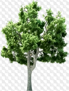 PSD trees collection - 12 psd ( 726 layers, transparent