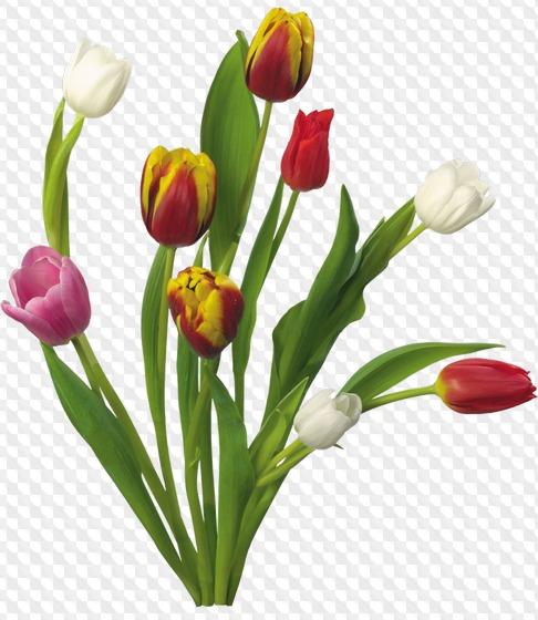 15 Png Flores De Primavera Ramos De Flores De Primavera Imagenes
