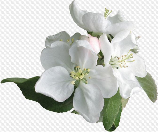 Psd Png Flores Blancas Flores Blancas Y Corazones Rojos Imagenes