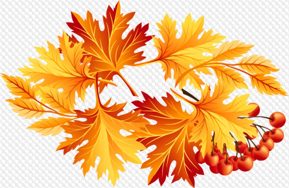 Марта шаблонами, картинки осенних листьев на прозрачном фоне