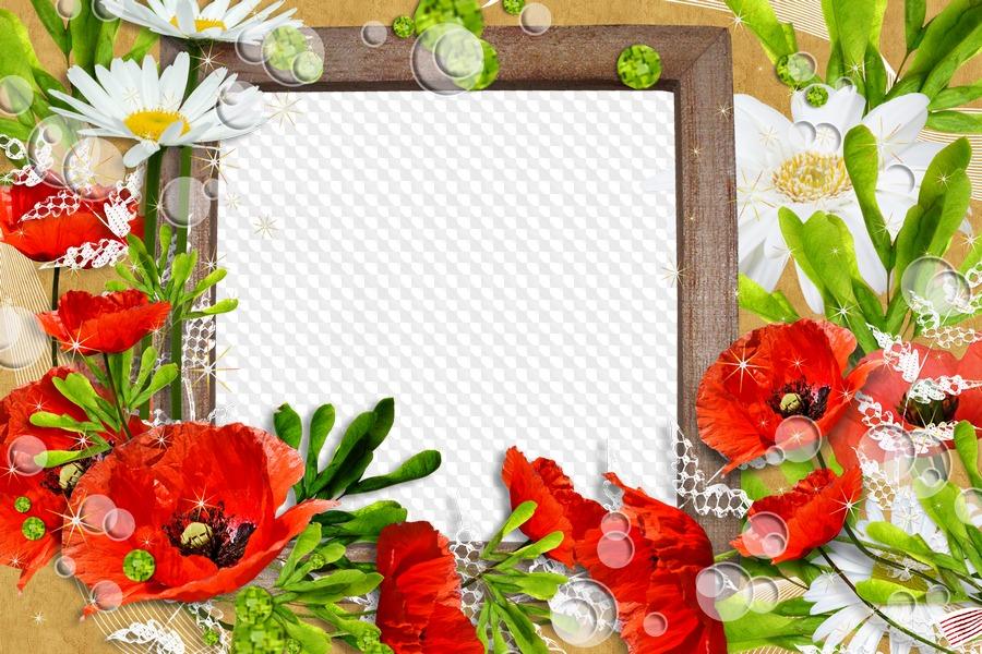 Margaritas blancas y amapolas rojas, marco para Photoshop. Marco PNG ...
