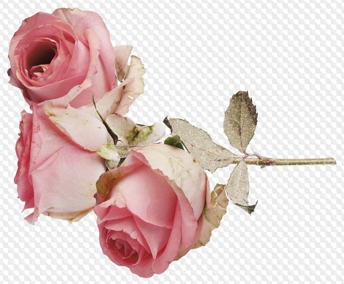 Носки розы фото спицами страна мам отправишься огромный
