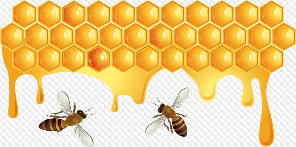 Картинка соты пчел для детей