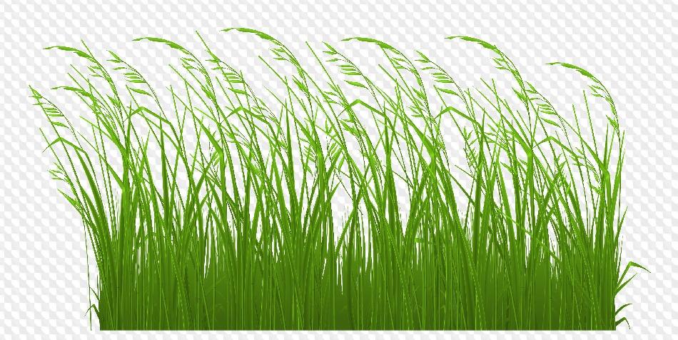 пленка травы на прозрачном фоне картинка сделать сами