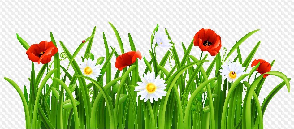 Своими руками, летние цветы картинки для детей на прозрачном фоне