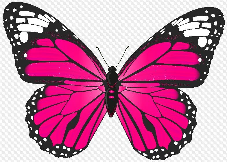Анимацией радуги, бабочки картинки на прозрачном фоне