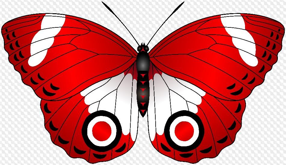 Картинки бабочки для детей на прозрачном фоне, надписями днем