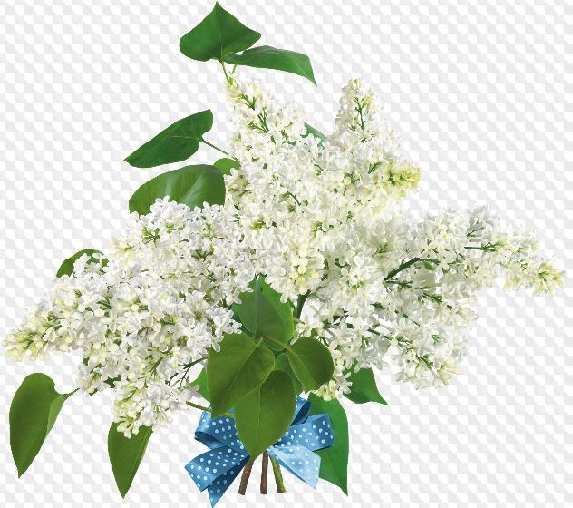 Psd 8 Png Ramo De Flores De Primavera Snowdrops Lirio Y Lila