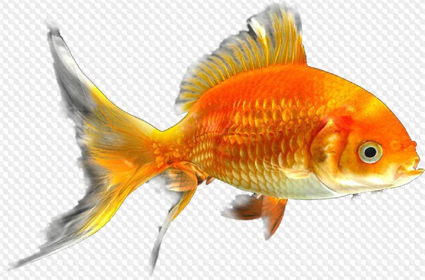 Зайчики картинки, картинки золотая рыбка на прозрачном фоне