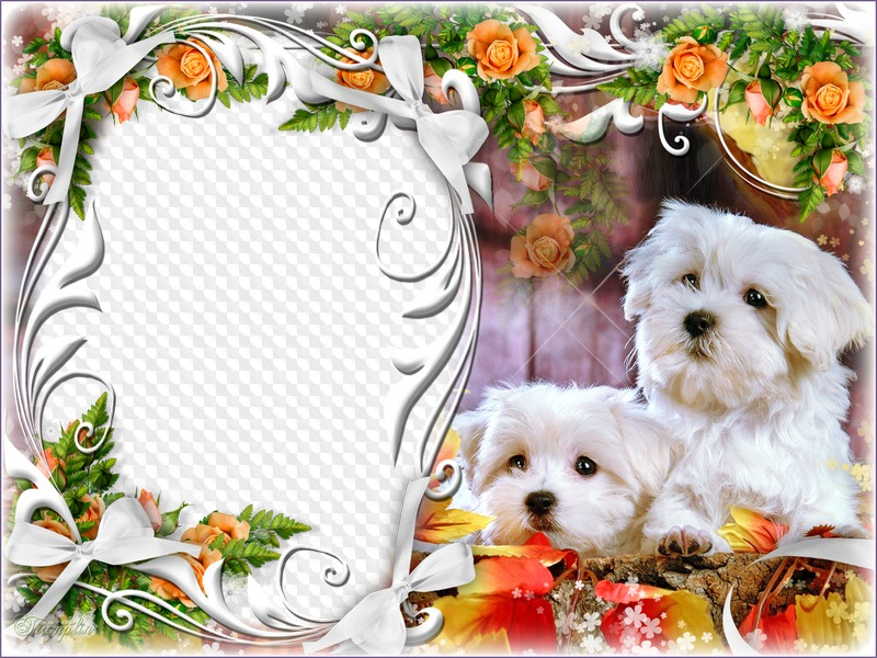 Cute dogs Picture frame. Transparent PNG Frame, PSD Layered Photo ...