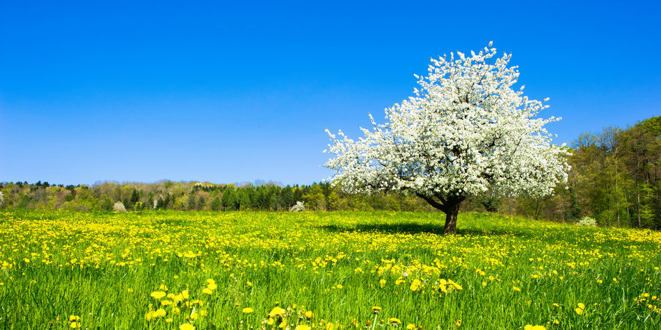 Nature, fields, grass, flowers - Panoramic photos