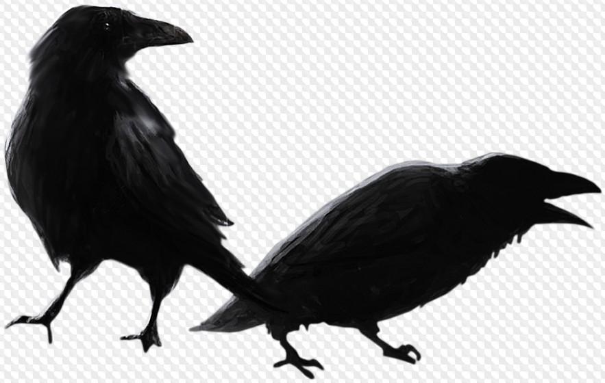 Черные птицы картинки на прозрачном фоне