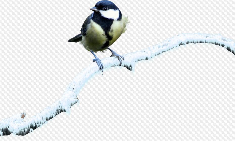 запросу железнодорожный фото синички на прозрачном фоне гифки стар