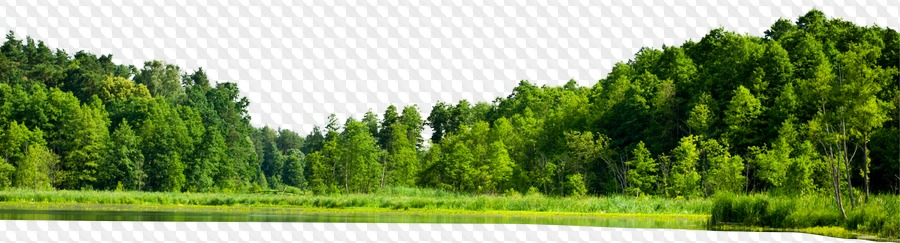 21 Png Green Forest Forest By Lake Forest With Green Field Png Images With Transparent Background Download 83,895 forest free vectors. 21 png green forest forest by lake