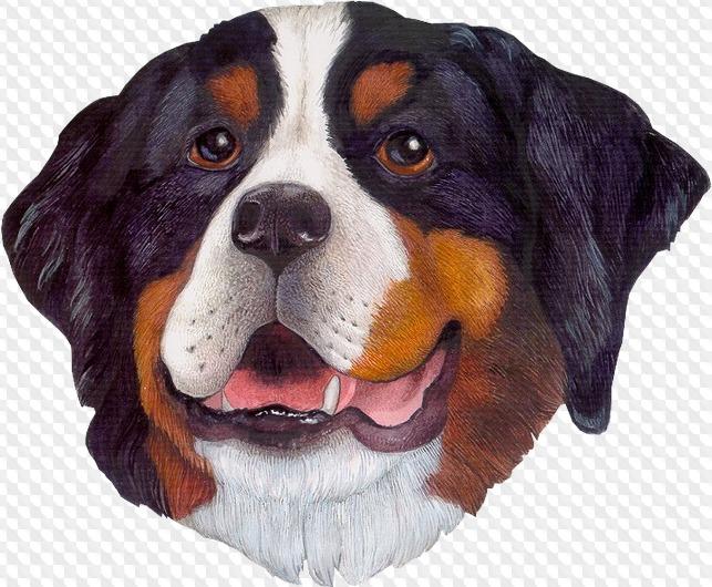 лица домашних животных картинки картинки разные интересные