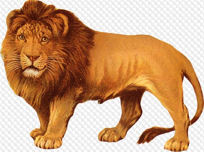 Картинка со львом для детей