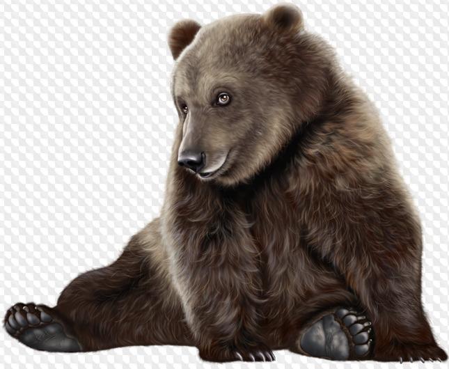 Медвежата картинка на прозрачном фоне