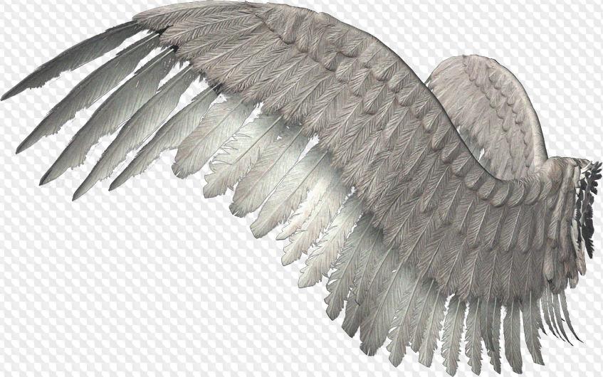 что за фоторедактор крылья оно