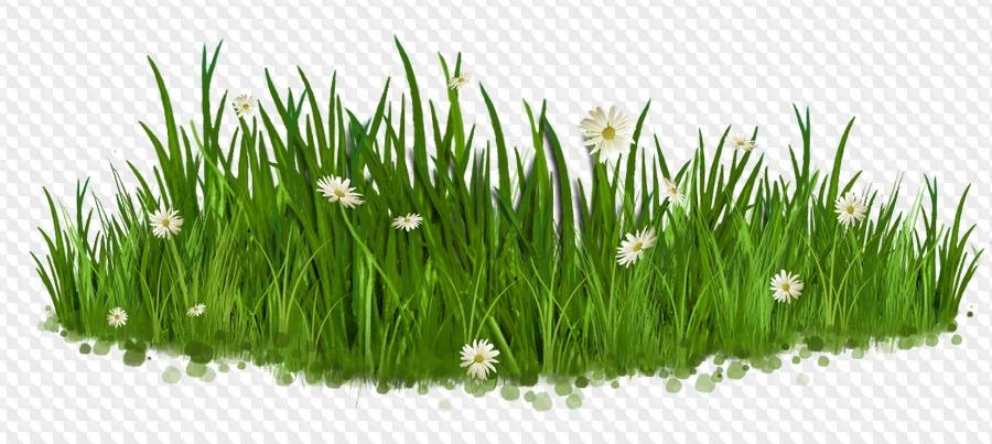 Днем рождения, картинки трава для детей