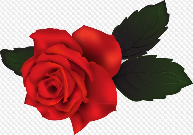 Rose Clipart With Transparent Background